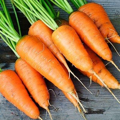 Pure Carrot Root Daucus Carota Infused Herbal Oil At